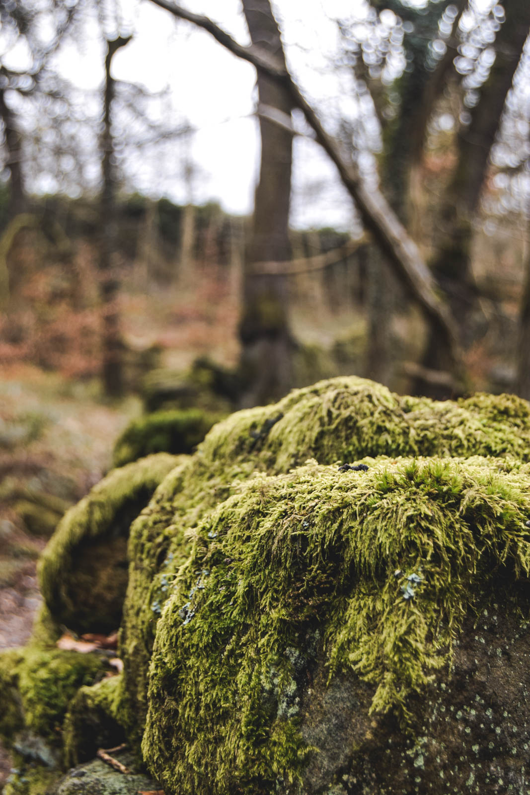 moss covered rocks in peak district