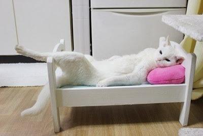 Gato en su cama de Ikea