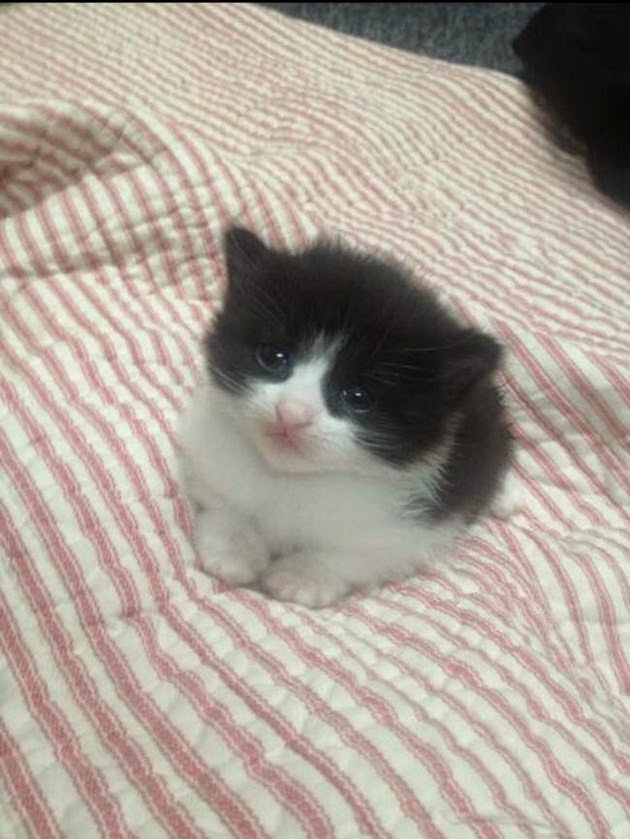 tiny-kittens-pictures-1