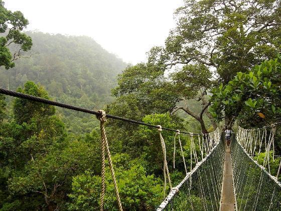 Canopy walkway | Sumber: blueskyoutdoor