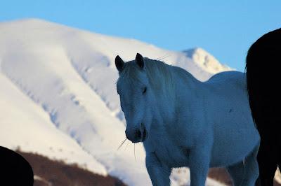 cavallo parco nazionale abruzzo