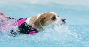 hidroterapia para cães