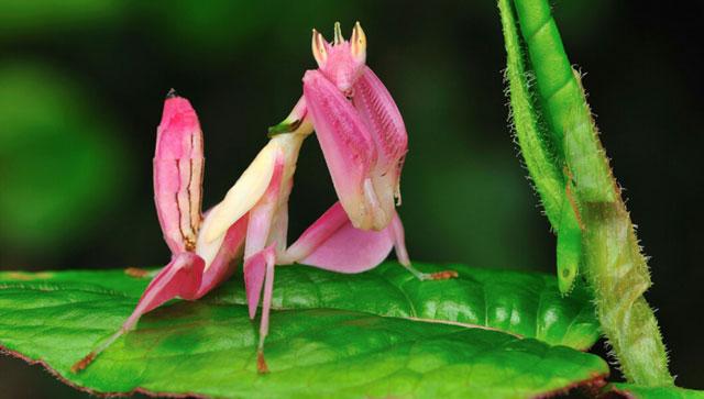 Imut Produk Alam Dari Binatang Hingga Alam Yang Berwarna Pink