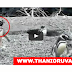 Female penguin fight after Penguin gets cheated on