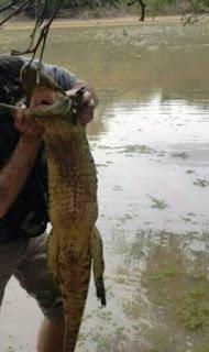 De acuerdo con los expertos las crecidas de los ríos superiores al Salado causaron que muchas especies migren hacia otros cursos. Los pescadores temen que la aparición de estos animales afecte seriamente el ecosistema, por lo que piden a las autoridades que tomen cartas en el asunto.