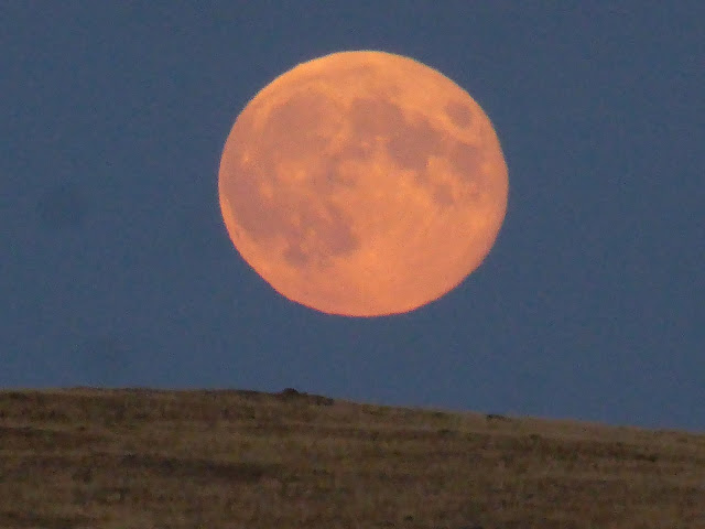 Pink Moonrise Mongolia