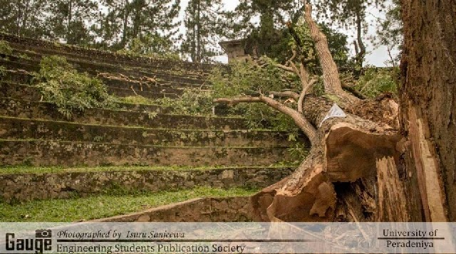 Robarosiya Tree Peradeniya University Cut Down