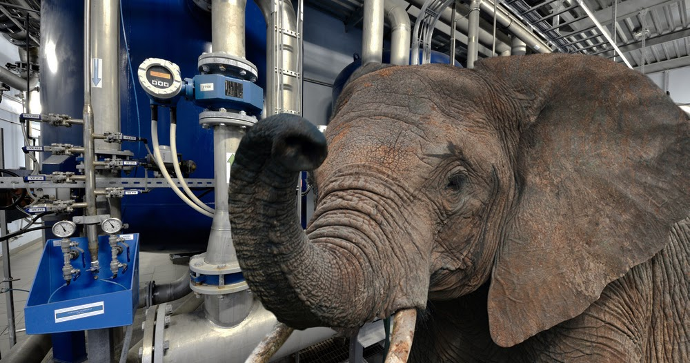 Elefant-muss-Handwerkerausbildung-abbrechen-weil-er-immer-Bleistifte-hinter-den-Ohren-verliert