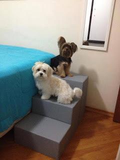 escadas para cães em camas box