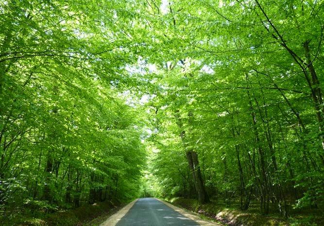 Carretera del Valle del Loira.