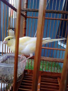 Macam Suara Burung Kicau,aneka  Burung Kicau