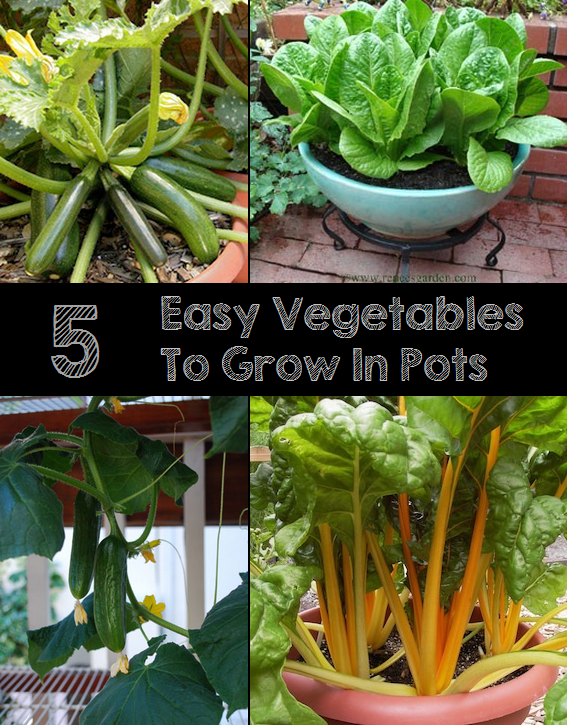 5 easy vegetables to grow in pots my favorite things for Easiest vegetables to grow