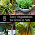 5 Easy vegetables to grow in pots #vegetable_gardening