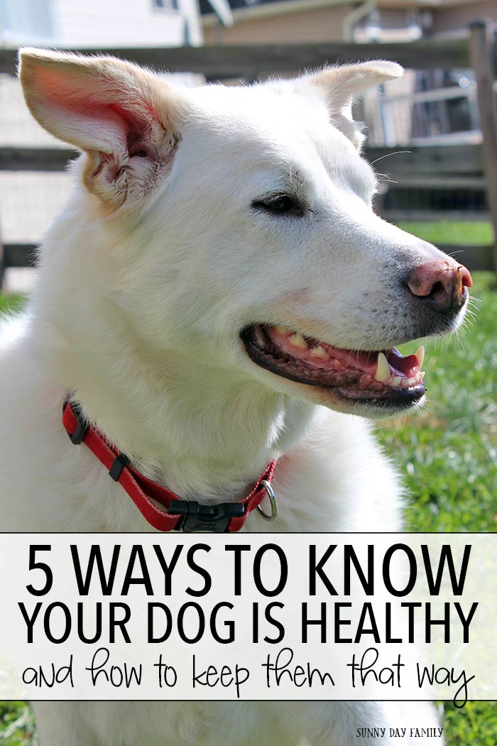 Know the essential signs that your dog is healthy and find out how to keep your dog healthy too! Great advice from an experienced dog mom.