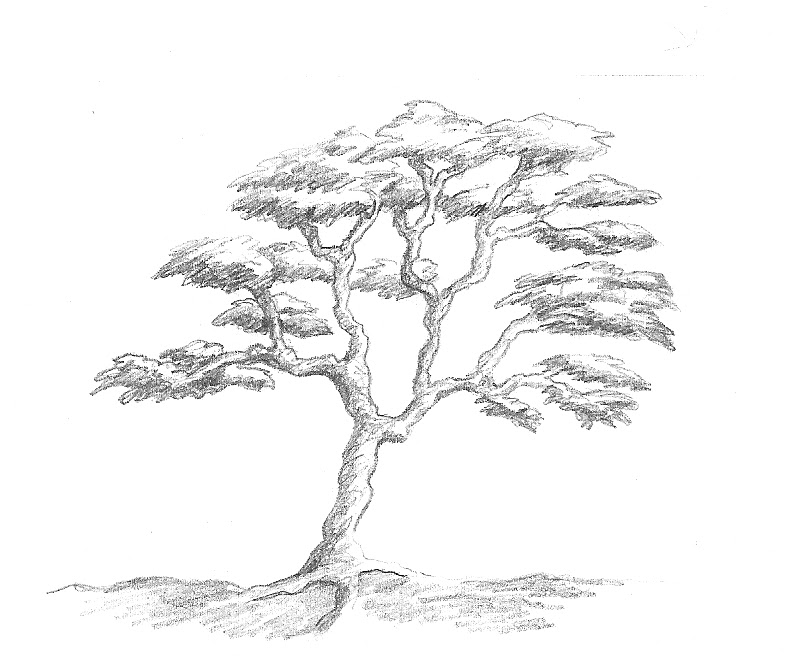 Art by Aunt Marcy: Simple Pencil Drawing of a Tree
