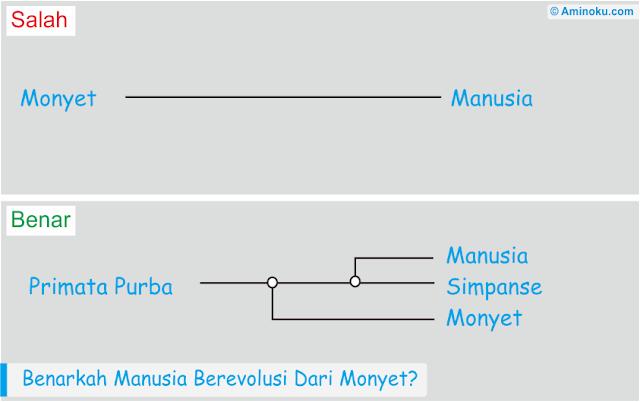 Manusia berevolusi dari monyet