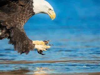 सपने में बाज देखना sapne me eagle ko dekhna