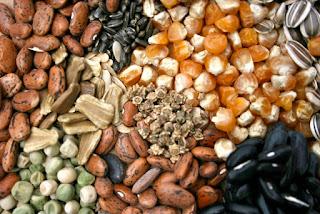 hibrid-seeds