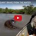 ชาวบราซิลเจองูยักษ์อนาคอนด้าลอยน้ำ ขณะกำลังกลืนเหยื่อลงท้อง (คลิป)