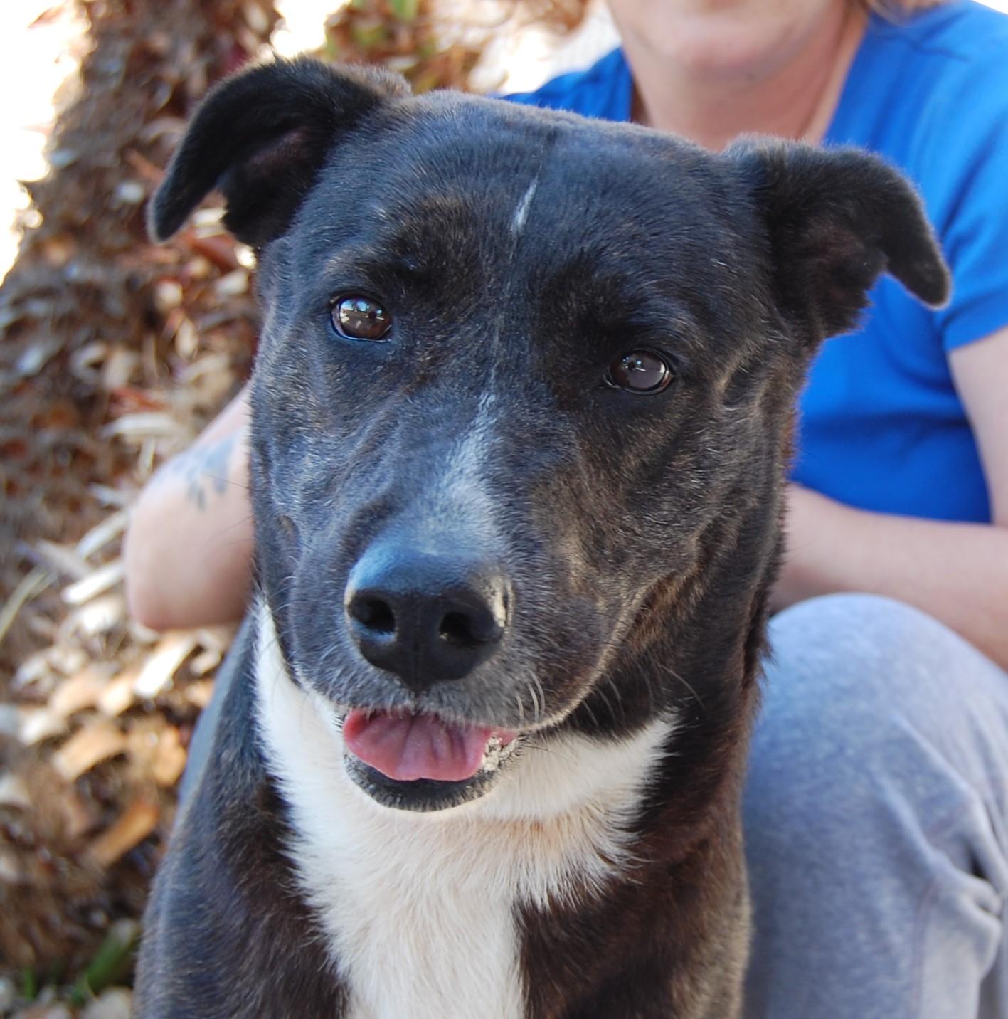 Dog Rescue Las Vegas Nv Nevada Spca Animal Rescue Cheza