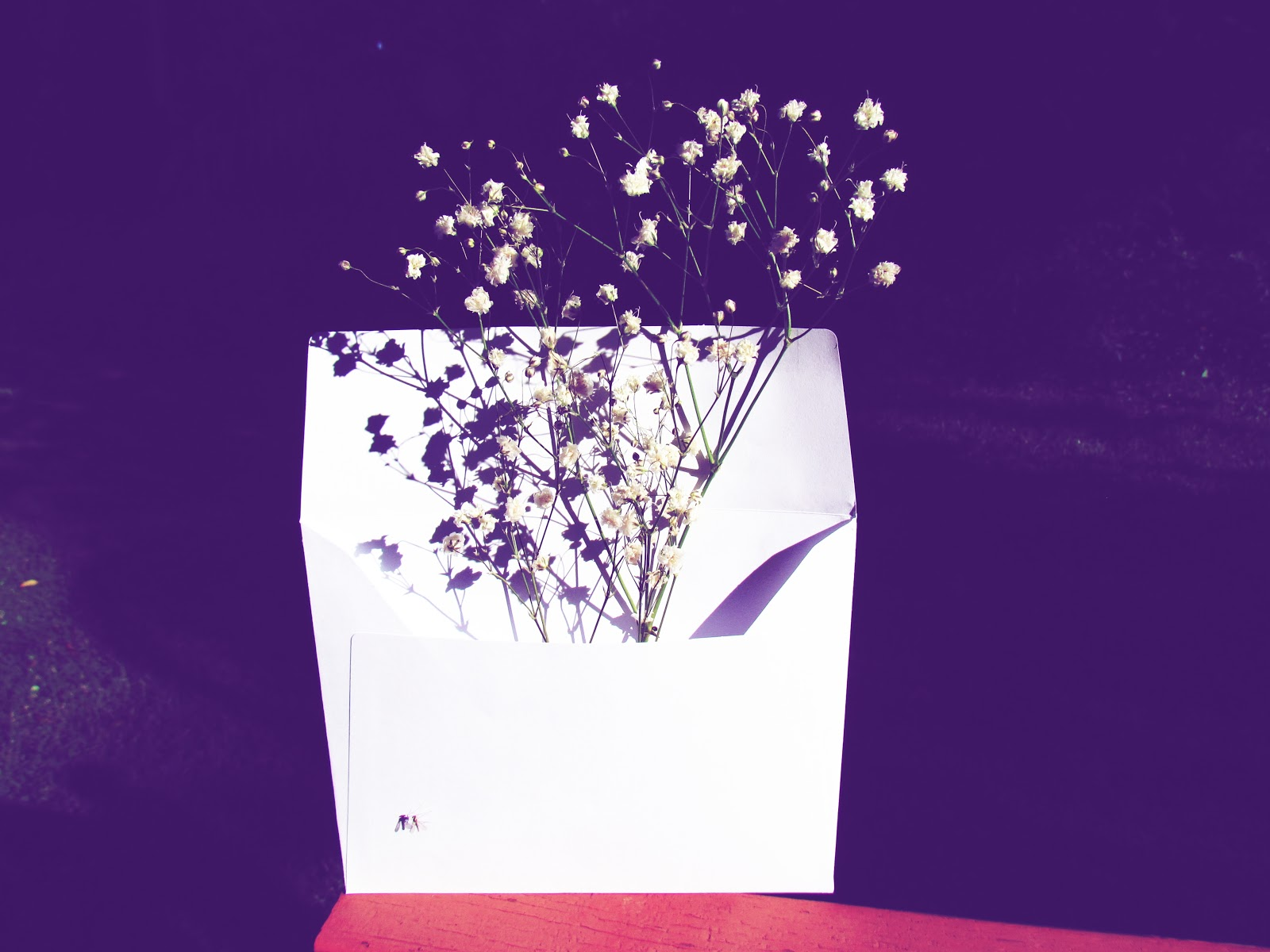 White Flowers Floral Arrangement + Still Life Photography