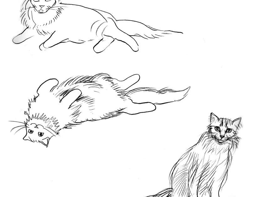 Cat 336
