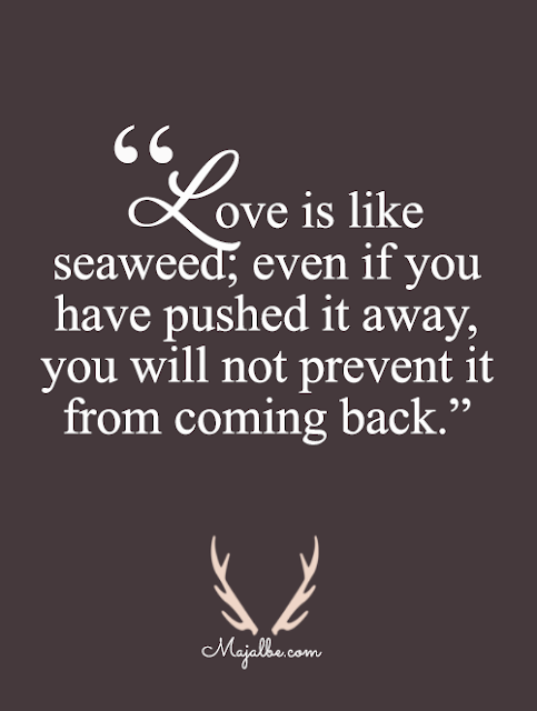 Love Is Like Seaweed Love Quotes