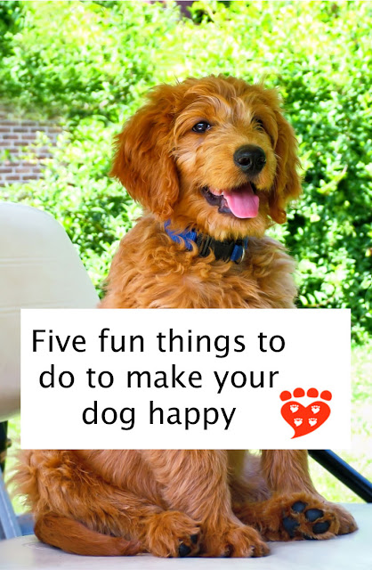 Five fun things to do to make your dog happy. Enrichment ideas for your dog, like this happy brown Goldendoodle puppy