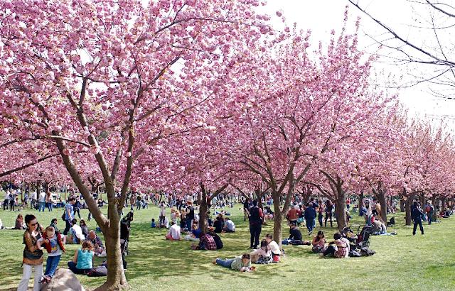 Jardim Botânico do Brooklyn em Nova York