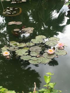 ピサ植物園の蓮池