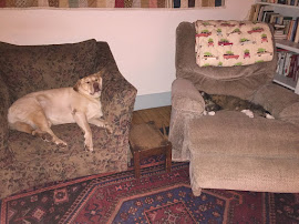 The hill farm dog Lucy and cat Raya