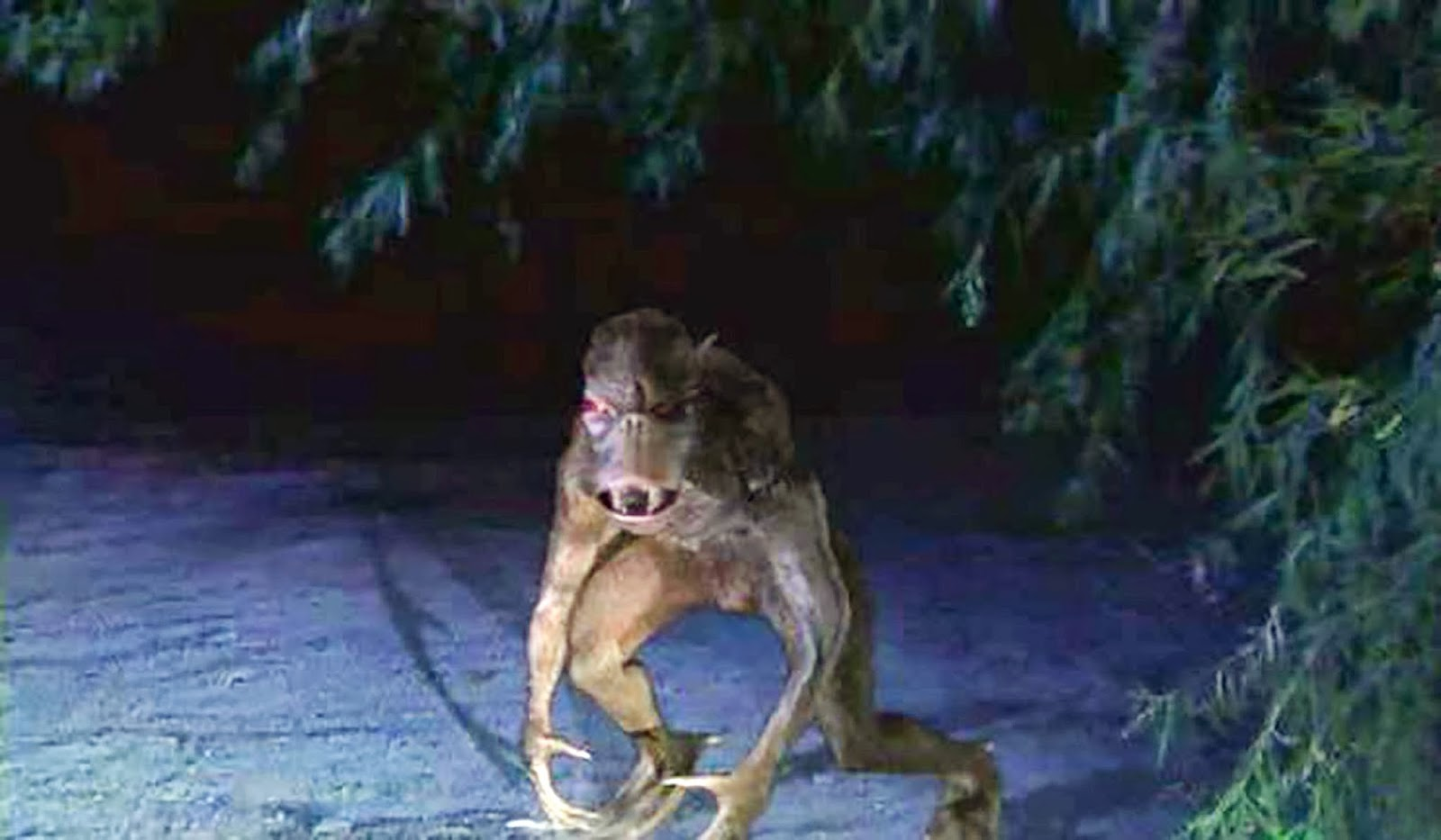 AMAZING MYSTERY VIDEOS: WEREWOLF SIGHTING CAUGHT ON CAMERA