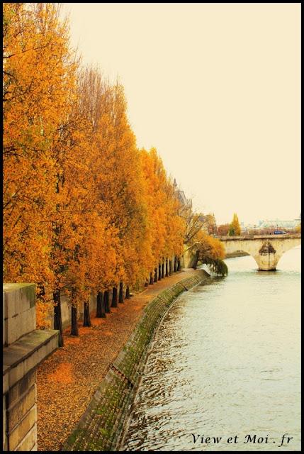 arbres d'automne parisien