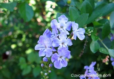 Những loài hoa mang nghĩa hạnh phúc