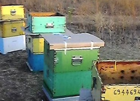 Πατέντα μελισσοκόμου εντελώς τζάμπα: Μέτρα προστασίας των μελισσιών για το καύσωνα