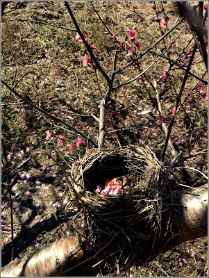 March 6, 2019 Finding treasures not on the beach, in a peach orchard