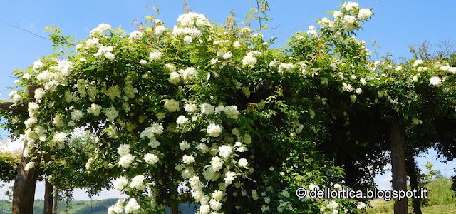 Dittamo rose allocco orto ortica percorsi nel giardino e birdwatching a Savigno Valsamoggia Bologna Zocca