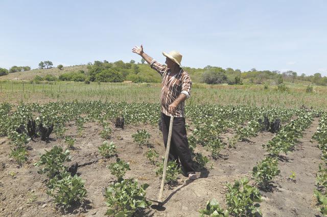 Chuvas escassas de fevereiro causam perda total do plantio