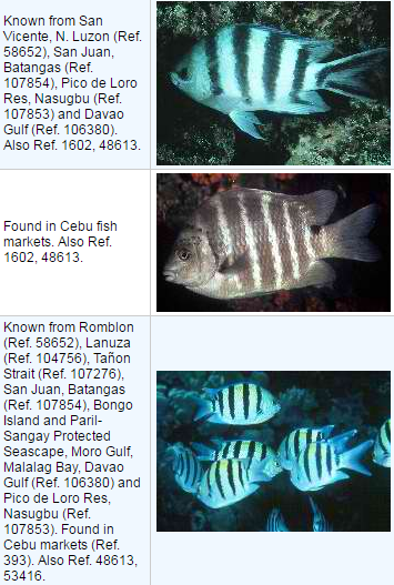 List of Marine (Saltwater) Fish in the Philippines