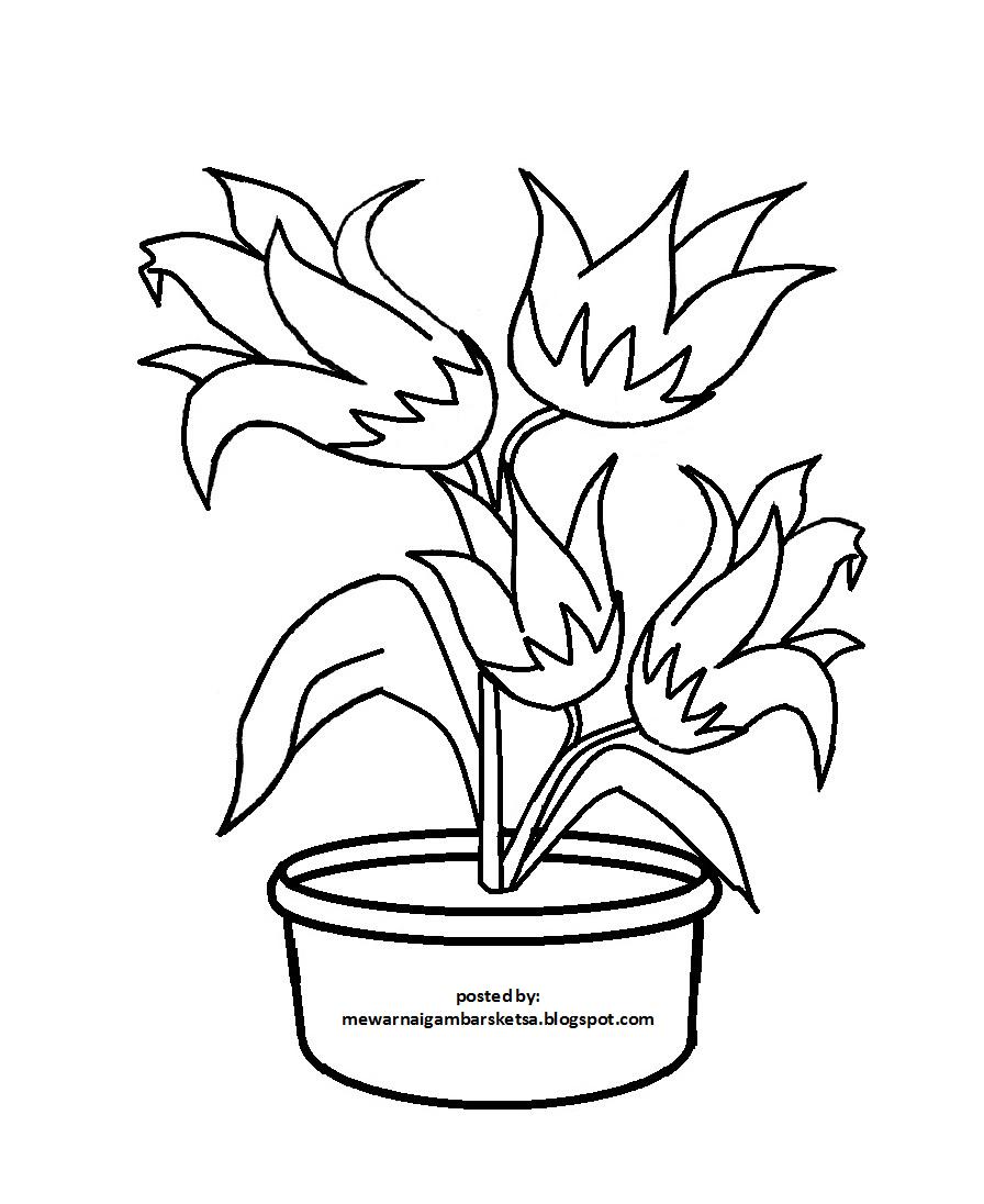 Bunga Krisan adalah bunga yang sangat indah Di bawah ini kalian bisa mewarnai gambar sketsa bunga krisan yang berwarna kuning pada bagian kelopaknya