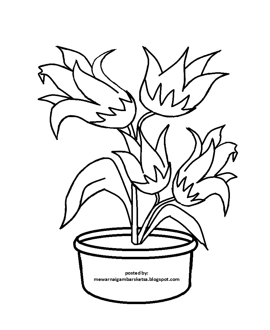 Sketsa Gambar Bunga Beserta Warnanya
