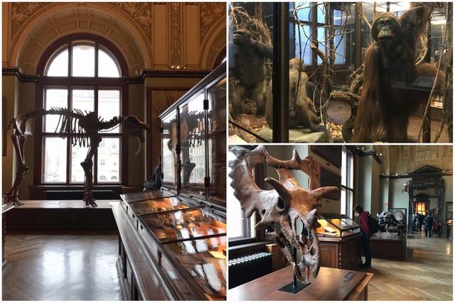 Museo de Historia Natural de Viena - Interior