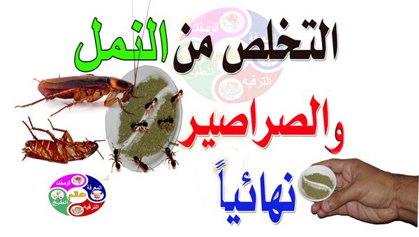 ضعي هذا المكون في المطبخ او في اي مكان سيخلصك من الصراصير والنمل الى الابد وبدون مبيدات حشرية
