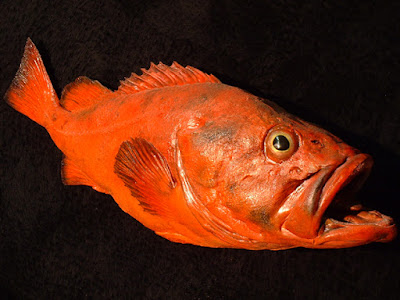 Rougheye Rockfish: Animals That Never Die