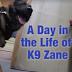 Μια ημέρα από την ζωή ενός αστυνομικού σκύλου...