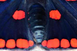 closeup of face on butterfly