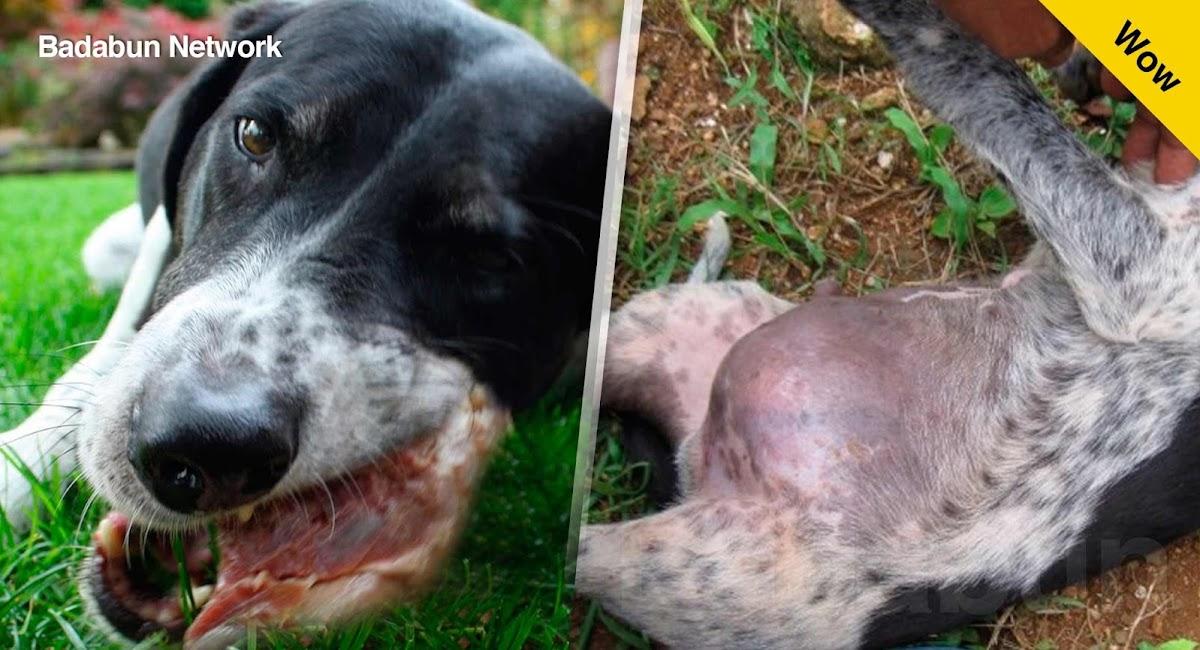 alimento mascotas perros comida peligro