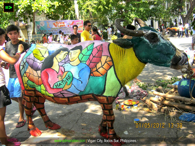 Carabao Painting 2012 | Karbo Festival of Vigan