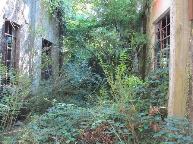 Due edifici nella giungla
