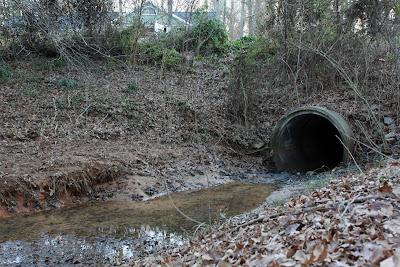 Inside a beavers dam - photo#40